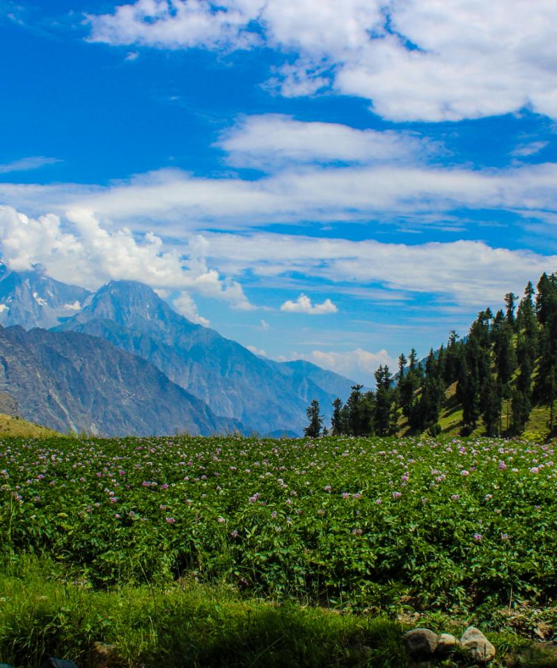 Naltar Valley - Rozefs Tourism